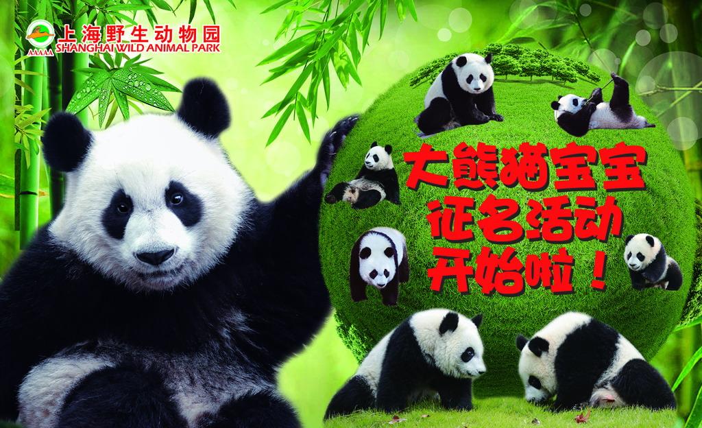 上海野生动物园大熊猫宝宝征名表